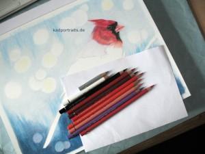 red_cardinal_003