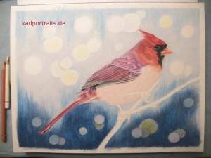red_cardinal_005