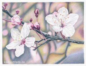 cherry_blossom_01