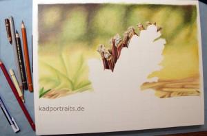 kiefernzapfen_004
