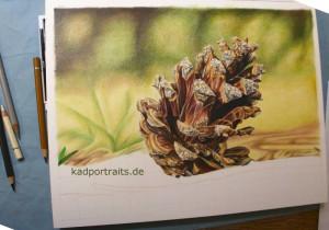 kiefernzapfen_005